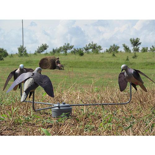 dove-feeding-frenzy
